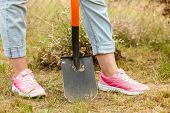 Woman gardener digging hole in ground soil with shovel. Yard work around the house poster