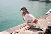 Brown and white city dove near the water poster