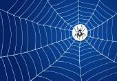 Spider in the middle of white net on blue background poster