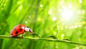 Fresh morning dew on a spring grass and little ladybug, natural background. Sunny day concept. Close up with shallow DOF. poster