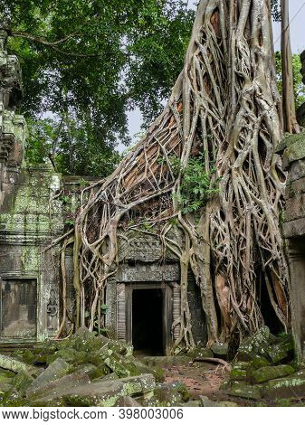 Tangled Tree Roots Overgrow The Stone Temple Of Ta Prohm, The Ruin Complex Of Angkor Wat, Cambodia