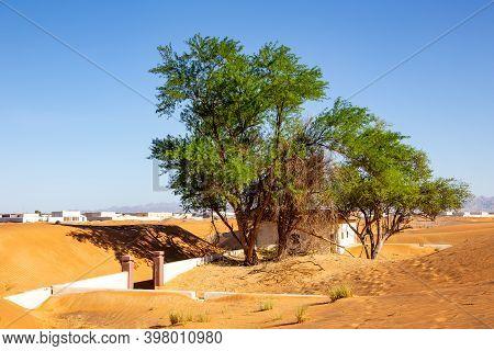 Wild Ghaf Trees And Buried In Sand Buildings On A Sandy Desert In Al Madam Buried Ghost Village In U