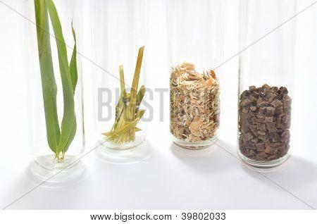 Natur To Biopolymer