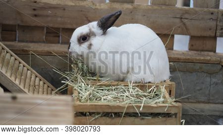 White Color Rabbit Or Bunny Sitting And Playing On Cement Floor In House