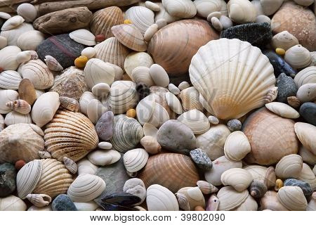 Assortment of sea shells with large scallop, pebbles, stones, and driftwood. poster