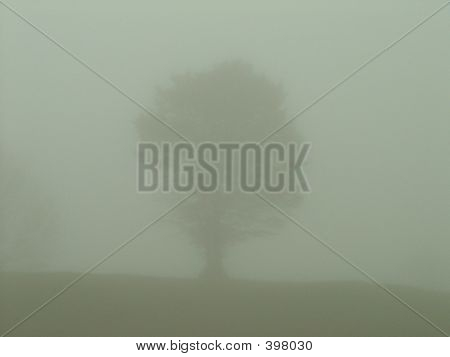Tree In Distant Fog