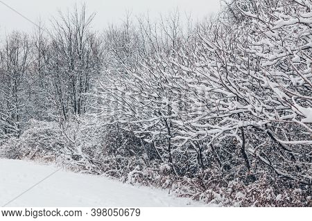 Beautiful Winter Landscape Scene View. Christmas Winter Card. Trees  Bushes Under Snow In Park Outdo