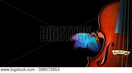 Violin Isolated On Black Closeup. Beautiful Blue Butterfly Morpho On Violin. Music Concept. Copy Spa