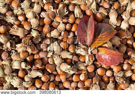 Hazelnuts With Shell And Red Leafs. Backgrond Made Of Hazelnuts.