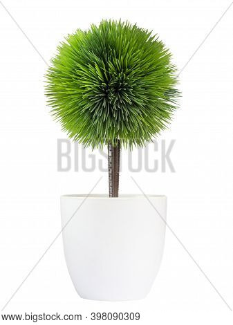 Tree In Ceramic White Pot For Decorate In House Or Office.