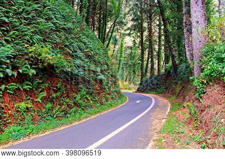 One-way Through The Forest - A Section Of Old Us 101 - Oregon Coast - Near Depoe Bay, Or