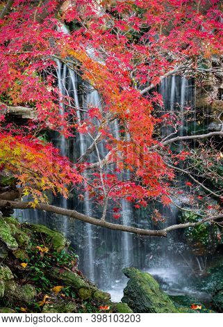Stunning Fall Colors In The Fort Worth Botanic Garden Featuring A Cascading Stream In The Background