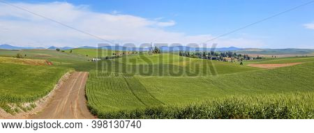 Panoramic view of rolling hills of wheat fields in Washington  state
