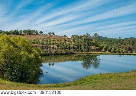 Apple Orchard In The Background With A Irrigation Pond Reflecting The Vibrant Blue Skies In The Fore