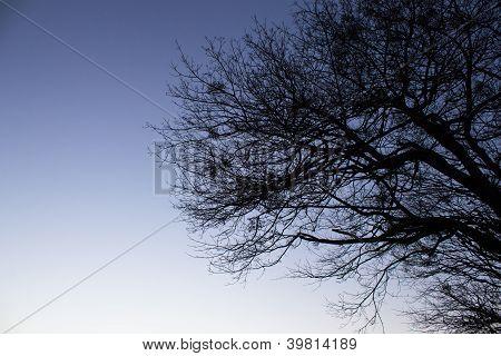 Dark Tree Branches