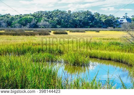 Green Grass In Saltwater Marsh At High Tide