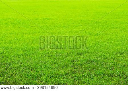 Nature Green Grass In The Garden Background