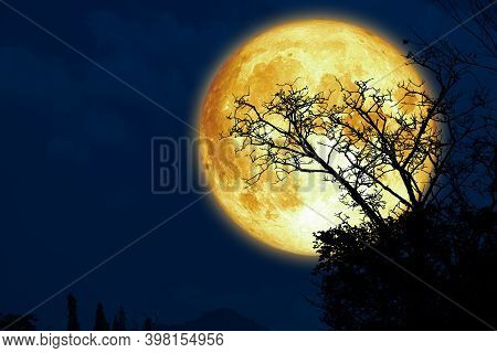 Super Sturgeon Moon And Silhouette Dry Branch Tree In The Dark Night Sky