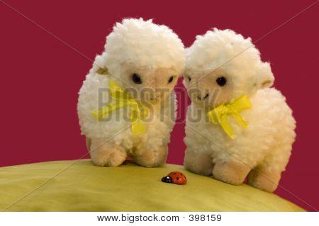2 Sheep Looking At A Ladybird