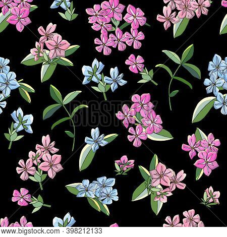 Seamless Pattern With Phlox Flowers Isolated On Black.