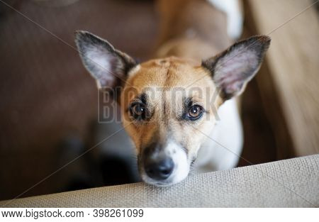 Curious Dog Looking At The Camera. Close-up Of A Young Mix Breed Dog Head Indoors. Dog Head Tilt To