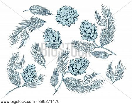 Fir Cones Set, Pine Tree Branch Spruces, Vector Decoration Elements For Patterns And Backgrounds. Fi