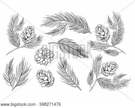 Pine Cones, Fir Branches With Pinecones, Vector Fir Tree Set Of Decoration Elements. Fir Cones, Pine