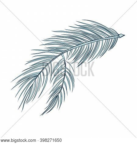 Fir Cones Set, Pine Tree Branch Spruces, Vector Line Art Decoration Element For Patterns And Backgro