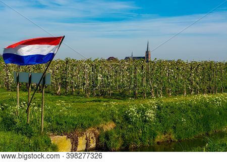 Springtime In Fruit Region Betuwe In Netherlands, Dutch Flag, Church And Blossoming Orchard With App