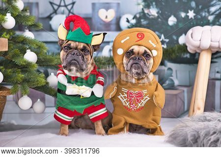 Pair Of Festive French Bulldog Dogs Wearing Funny Christmas Costumes Dressed Up As Christmas Elf Wit