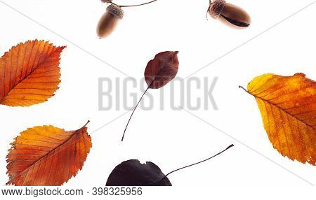 Red Dry Leaves On A White Background