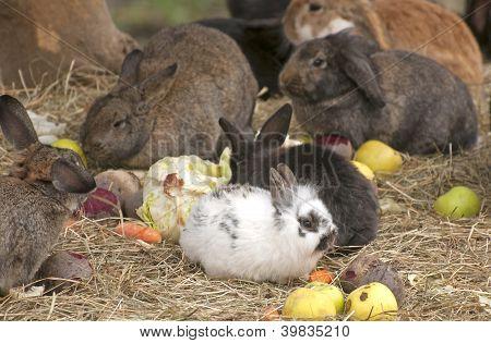 Farm of small animals
