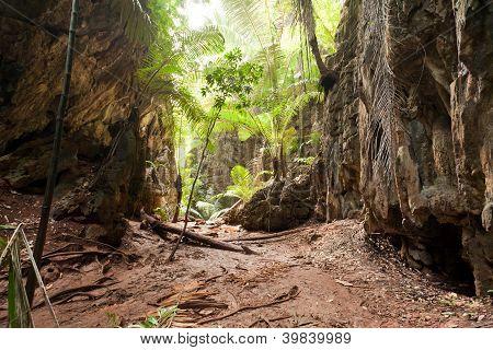 Tropical Jungle Landscape