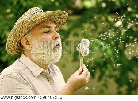 Enjoying Summer Rest. Symbol Of Thin Gray Hair. Old Man Blow Dandelion Flower. Alzheimer Dementia. C