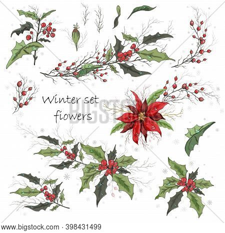 A Set Of Winter Flowers (poinsettia, Holly) Isolated On A White Background. Realistic Hand-drawn Bou