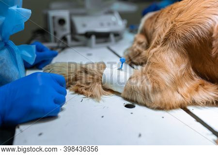 Dog With A Catheter In The Paw On The Operating Table. Preparation For Surgery