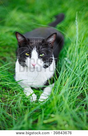 Cute black cat lying on green grass lawn, shallow depth of field portrait poster