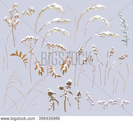 Set Of Snow Covered Wild Grass, Herbs And Cereals Isolated On Gray Background. Simple Dried Oats, Th