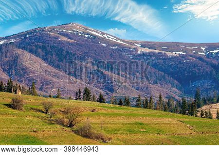 Mountainous Rural Landscape In Springtime. Fields And Trees On Rolling Hills In Green Grass. Snow On
