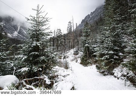 Winter Forest Path In The Mountains. Trees Are Covered With Snow. Amazing Winter Time Landscape.