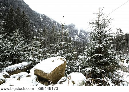 Beautiful Winter Forest, Evergreen Spruce Trees  And Stones Are Covered With Snow. Amazing Winter La