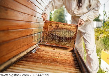 Young Female Beekeeper Pulls Out From The Hive A Wooden Frame With Honeycomb. Collect Honey. Beekeep