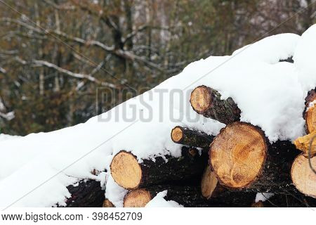 Wooden Logs Piled Up Covered With Snow In The Forest, Pine Woodpile Cut After A Winter Snowfall In T