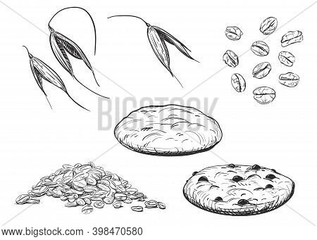 Detailed Hand Drawn Ink Black And White Illustration Set Of Oat, Oatmeal Biscuits, Leaf. Sketch. Vec
