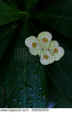 Round White Flower