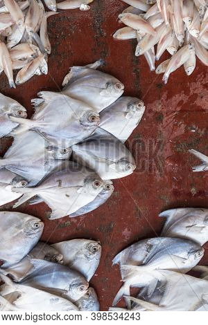 Fresh fish on display at seafood market in Fort Kochi, India. Daily fish market in Cochin.
