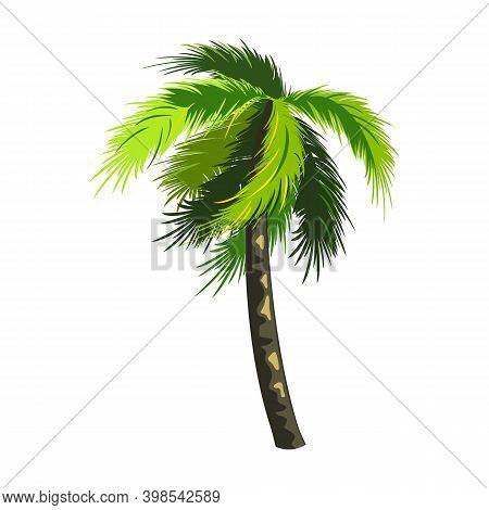 Tropical Coconut Tree, Miami Palm, Floral And Botanical. Vector Southern Plant, Summer Rest On Exoti