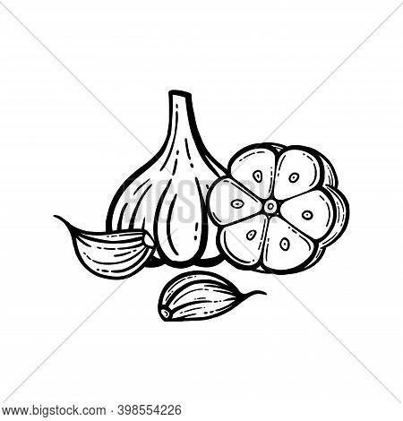 Garlic Set. Hand Drawn Illustration Of Chopped Garlic. Isolated Background.