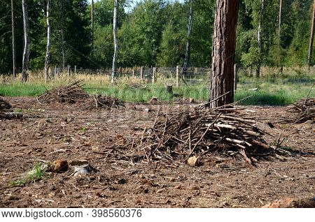 Glade In The Forest After Logging, Remove Branches Into Piles And Start Planting New Trees, Sometime