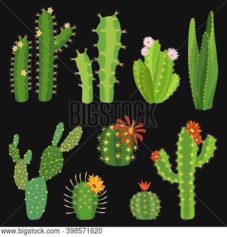 Cactuses. Cactus Flower Collection, Exotic Summer Green Cacti Plants Without Pots With Red And Pink
